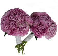 Peonies Delivery Peonies Wedding Flowers Buy Wholesale Peonies In Bulk Pink
