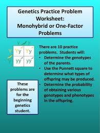 monohybrid cross worksheet by amy brown science tpt
