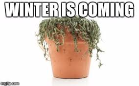 Winter Is Coming Meme Maker - dead plant imgflip