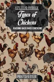 242 best images about homestead chickens on pinterest chicken