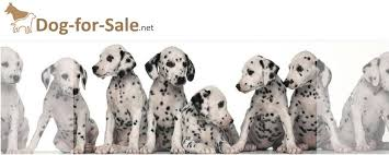 black friday puppy sale free dog ads dogs puppies for sale home facebook