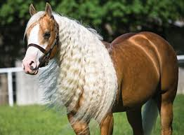 hairstyles for horses 10 smartest horse mane braiding ideas hairstylec