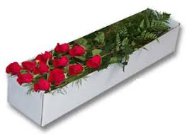 boxed roses stem roses boxed bitroses