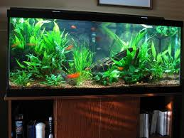 Best Tips For Selecting The Right And Healthy Fish Tank