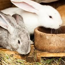 designing a rabbit playground petfinder