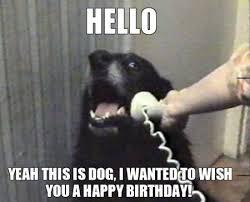 Happy Birthday Meme Dog - best birthday quotes happy birthday funny pics of a dog wishing