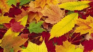 imagenes de otoño para fondo de escritorio fondos vintage otoño para fondo de pantalla en hd 1 hd wallpapers