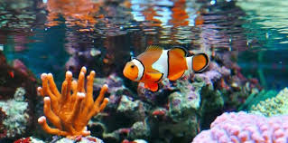 lessons finding nemo fish consulting