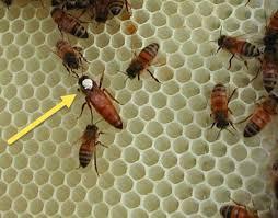 new hanover county beekeepers association