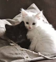 kitty 18th august 2017 love cats kittens