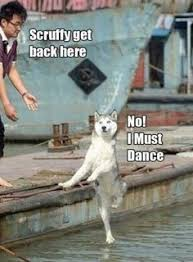 Dog Jokes Meme - funny dog meme joke caption picture ℓ ℓ pinterest caption