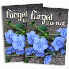 forget me not seed packets stock favors seed needs