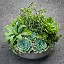 succulent arrangements succulent arrangements centerpieces don t to out of flowers