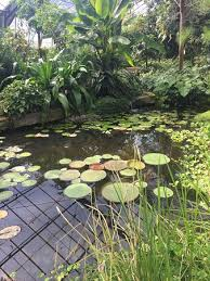 Botanic Gardens Dundee Archway Beautiful Sunday Morning Walk Picture Of Of