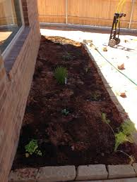 lola u0026 zoe building a backyard from scratch drought resistant
