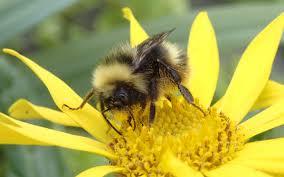 bees in the last frontier