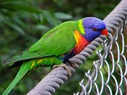 the varied world of australian birds nature documentary on