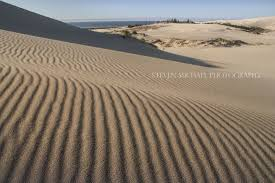 native plants grow on the sand dunes at this beach stock photo category oregon coast pacific northwest adventures
