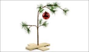 real deal or fabulous choosing a tree