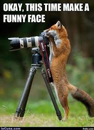 Meme Photographer - fox photographer meme generator captionator caption generator