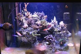 Aquascape Online Bonsai Tree Inspired Aquascape Page Reef Central Online Aquarium