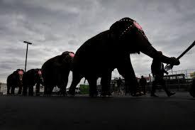 elephant car insurance 03 number raipurnews