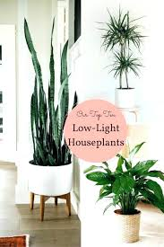 low light plants for office best tall indoor plants large office plants stupendous large office