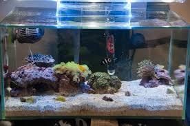 fluval edge marine light fluval edge marine conversion with clownfish marine aquarium