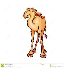 vector illustration of camel in cartoon style stock illustration