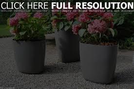 large flower pots for sale sheilahight decorations