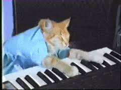 Cat Playing Piano Meme - piano videos gifs search find make share gfycat gifs
