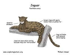 jaguar color diagram150 jpg