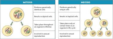 agriedu4u difference between mitosis and meiosis