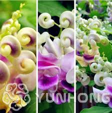 online buy wholesale climbing plants vines from china climbing