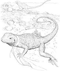 realistic lizard coloring pages get coloring pages