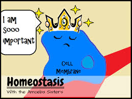amoeba sisters handouts science with the amoeba sisters