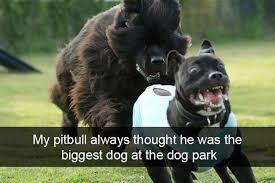 Pitbull Meme - pitbull meme my favorite daily things