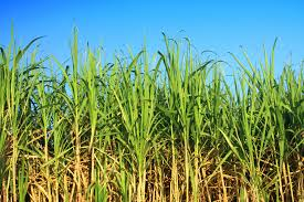 plants native to brazil feedstocks virent inc