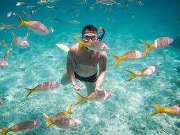 Florida Snorkeling images 1 rated snorkeling on gulf coast jpg