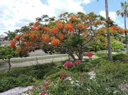 large trees orange flowers southwest florida book cover pics