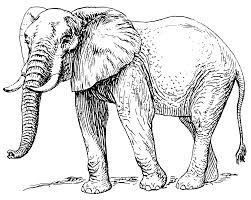 african elephant coloring pages african elephant african