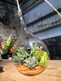 sammy u0027s flowers hanging succulent terrariums