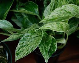 improve the air with low light low maintenance indoor plants whav