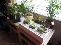 succulent indoor garden gardening ideas