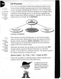 cellular transport and the cell cycle worksheet worksheets