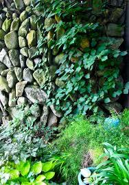 the secret garden u0027s shadowy allure u0026 mysterious prince pickerel u0027s