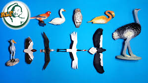 learn animal names different types of birds and bird sounds for