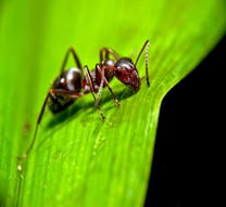 Ants In Bathtub How To Get Rid Of Carpenter Ants At Minimal Cost To You