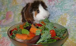 create people food that is safe for guinea pigs to eat petcha