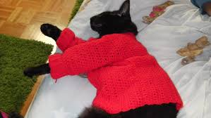 sweaters for cats sweater pullover crochet tutorial